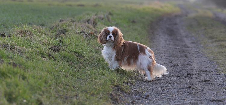 Frau Schmuddelfuss ist ein Hundeblog, der von einer kleinen Cavalier King Charles Spaniel Hündin namens Ivy handelt. In diesem Dogblog geht es um Erlebnisse, Ausflüge, ausgiebige Shoppingtouren für den Hund, Erkrankungen wie Hüftgelenksdysplasie (HD) und Syringomyelie, leckere Rezepte, einfachen DIYs und vielem mehr.